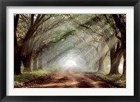 Framed Evergreen Plantation A