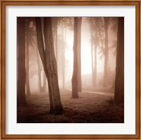 Framed Woods Study II