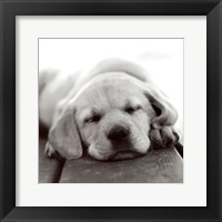 Framed Nap Time