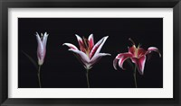 Framed Bloom II
