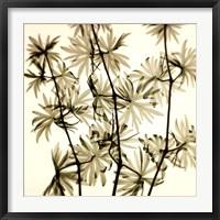 Framed Wild Geranium