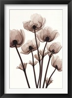Framed Windflowers