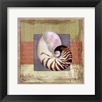 Montego Nautilus Framed Print