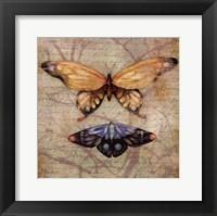 Framed Vintage Butterflies II