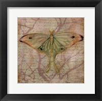 Framed Vintage Butterflies III