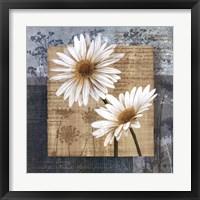 Daisy Field II Framed Print