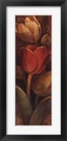 Framed Tulip Shadows II