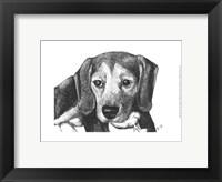 Framed Lindy the Beagle
