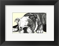 Framed Gracie the Bulldog
