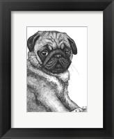 Framed Ralph the Pug
