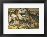 Framed Johnson's Dog Breeds I