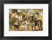 Framed Johnson's Dog Breeds II