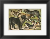 Framed Johnson's Dog Breeds III