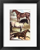 Framed Johnson's Horse Breeds I
