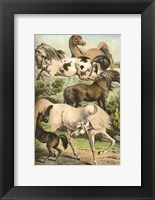 Framed Johnson's Horse Breeds II