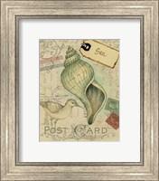 Framed Postcard Shells II