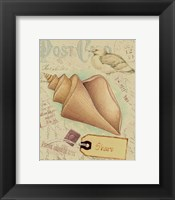 Framed Postcard Shells III