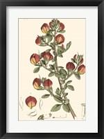 Framed Antique Floral Plate I