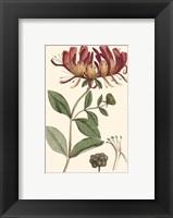 Framed Antique Floral Plate II