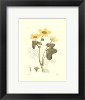 Framed Antique Floral Plate VII