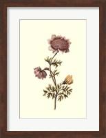 Framed Flora & Fauna I