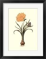 Framed Flora & Fauna III