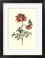 Framed Flora & Fauna IV