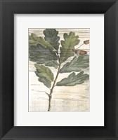 Framed Small Weathered Oak Leaves II