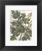 Framed Small Weathered Maple Leaves I