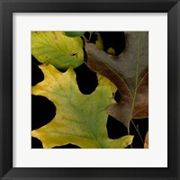Framed Small Vivid Leaves II