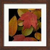 Framed Small Vivid Leaves III
