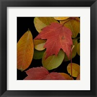 Framed Small Vivid Leaves III