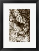 Framed Garden Textures IV
