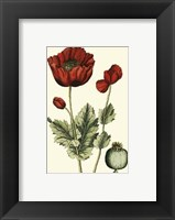 Framed Small Poppy Blooms I (P)