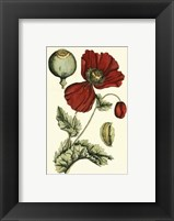 Framed Small Poppy Blooms II (P)