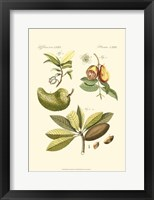 Framed Small Bertruch Breadfruit (P)
