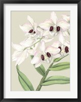 Framed Small Orchid Blooms II (P)