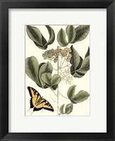 Framed Sm Catesby Butterfly&Botan. II (P)