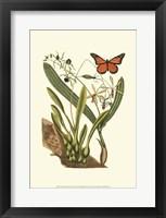 Framed Sm Catesby Butterfly&Botan. IV (P)