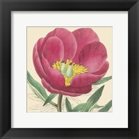 Framed Small Peony Collection I (P)
