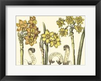 Framed Small Narcissus in Bloom I (P)