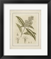 Framed Small Tinted Botanical II (P)