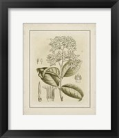 Framed Small Tinted Botanical III (P)