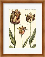 Framed Small DePasse Tulipa I (P)