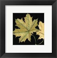 Framed Small Tandem Leaves II (P)