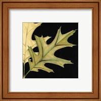 Framed Small Tandem Leaves III (P)