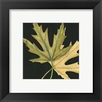 Framed Small Tandem Leaves IV (P)