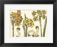 Framed Custom Narcissus in Bloom I (U)