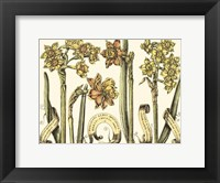 Framed Custom Narcissus in Bloom II (U)