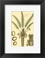 Framed Printed Exotic Palm III